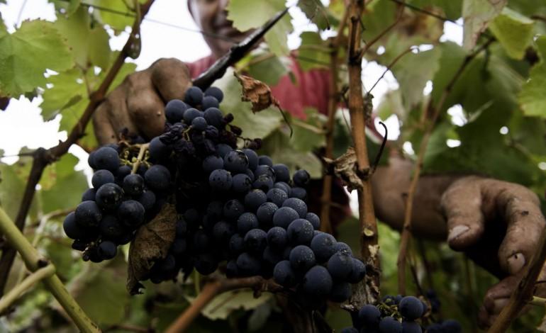 exportacoes-de-vinho-do-distrito-cresceram-25-no-ano-passado-9492