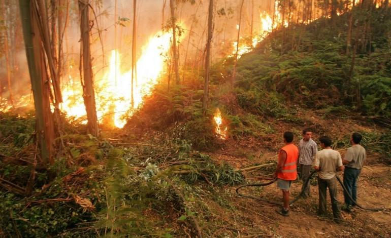 incendio-em-figueiro-dos-vinhos-mobiliza-144-bombeiros-4819