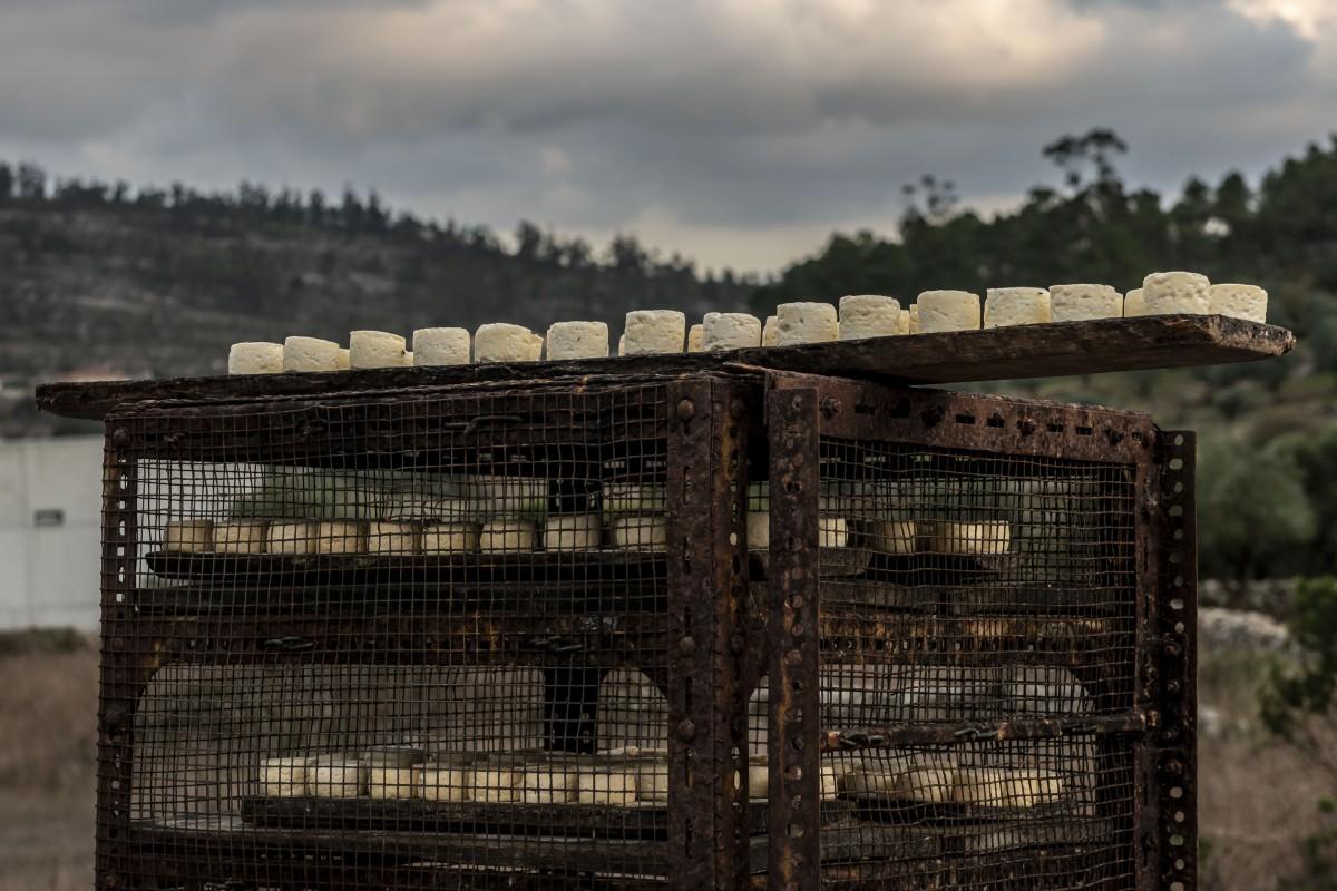 Os queijinhos da Dona Dionisia a secar ao ar livre