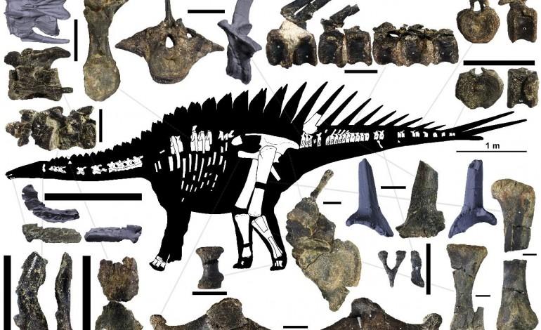 Miragaia longicollum é do Jurássico Superior