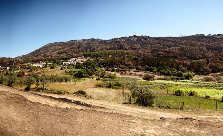 ja-ha-aldeias-a-trocar-eucaliptos-por-especies-autoctones-para-se-defenderem-dos-fogos-6760
