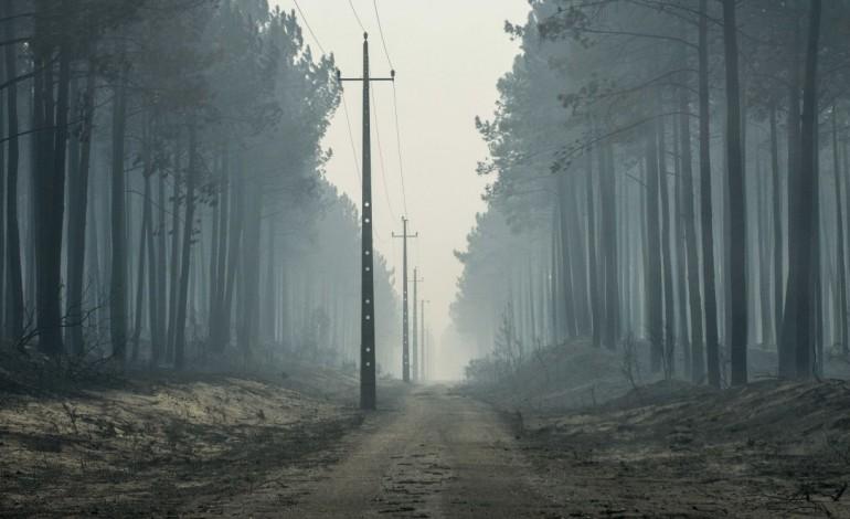 pombal-aposta-na-floresta-autoctone-para-recuperar-areas-ardidas-10725