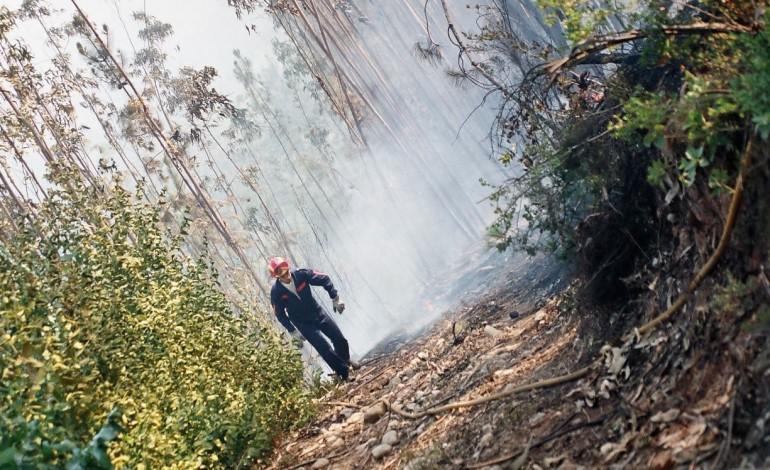 ao-fim-de-varios-anos-a-culpar-os-incendiarios-portugueses-descobriram-culpa-do-eucalipto-e-de-quem-o-planta-6667