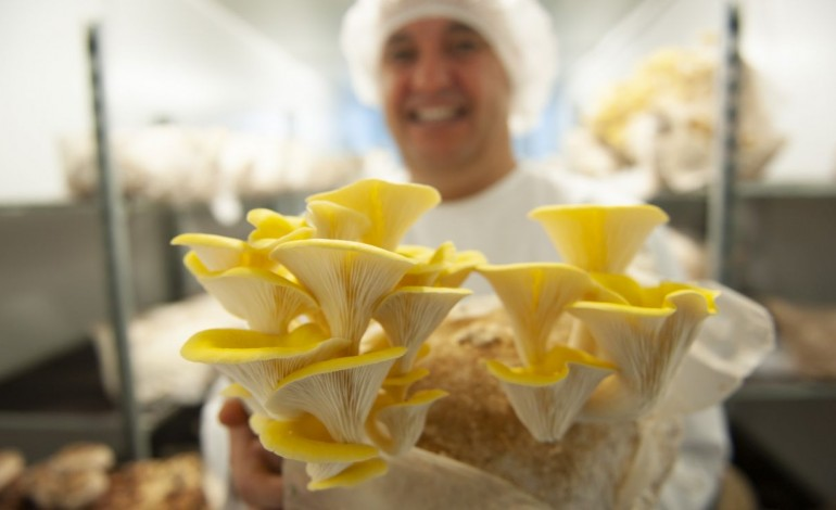 cogumelos-as-cores-de-porto-de-mos-para-o-mercado-gourmet-10086