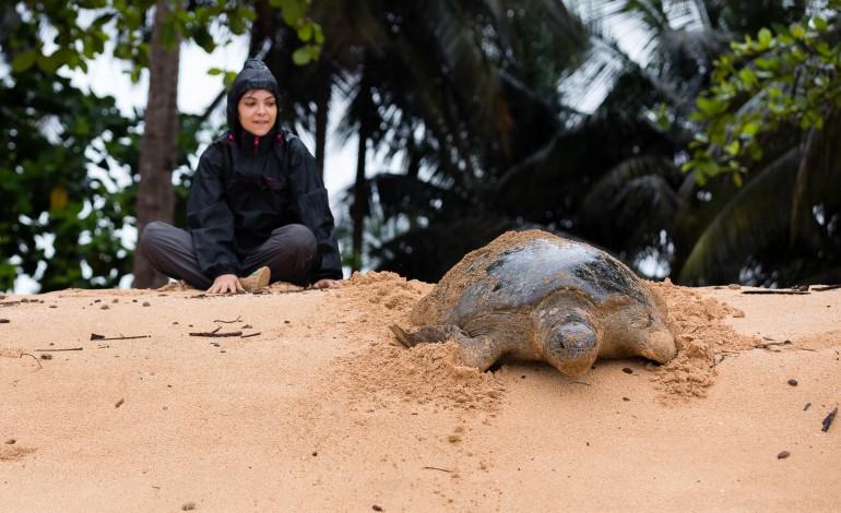 investigadora-do-ip-leiria-ajuda-a-salvar-tartarugas-em-sao-tome