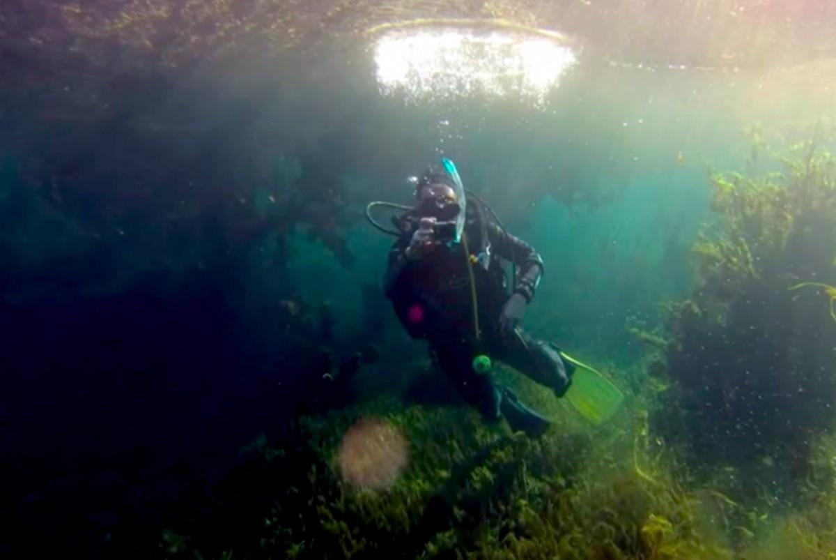 Polje mergulho