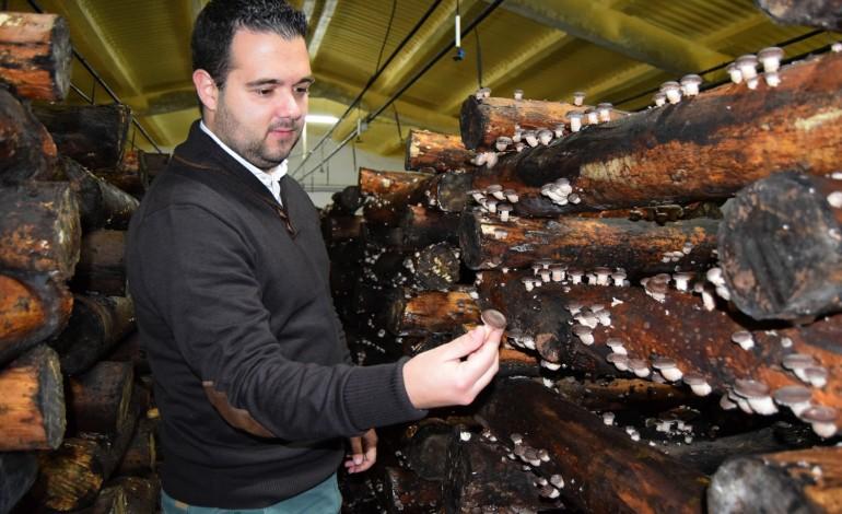 antiga-pecuaria-produz-agora-cogumelos-e-fruta-desidratada-7989