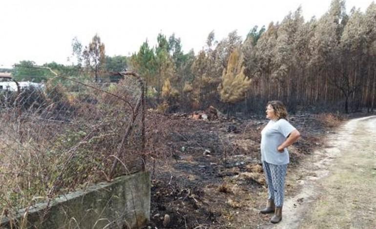 pj-incendio-do-pinhal-de-leiria-tera-comecado-num-terreno-com-lixo-e-tera-sido-uma-reactivacao-7410