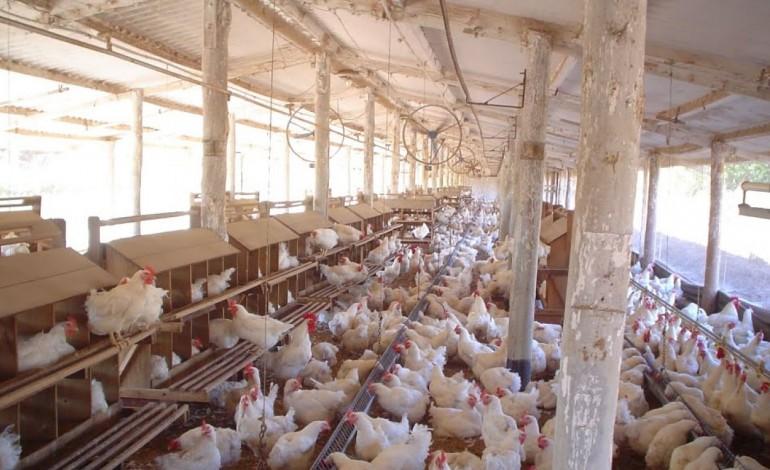 portugal-afectado-por-crise-dos-ovos-contaminados-com-pesticida-7094