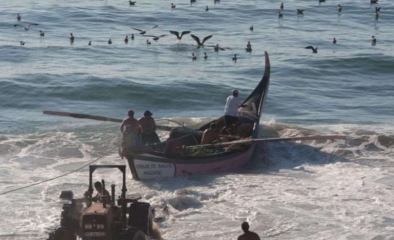 ongs-defendem-urgencia-em-aumentar-stock-da-sardinha-acima-dos-limites-de-seguranca-8035