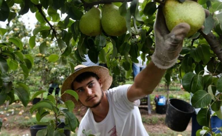 e-muita-fruta-da-pera-rocha-para-o-brasil-ao-coco-para-angola-4450