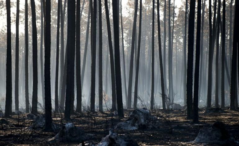 ambientalistas-da-zero-vao-plantar-mil-sobreiros-na-mata-nacional-de-leiria-8036