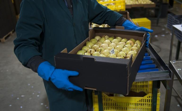 exportacao-de-pera-rocha-cresce-16percent-e-vale-90-milhoes-de-euros