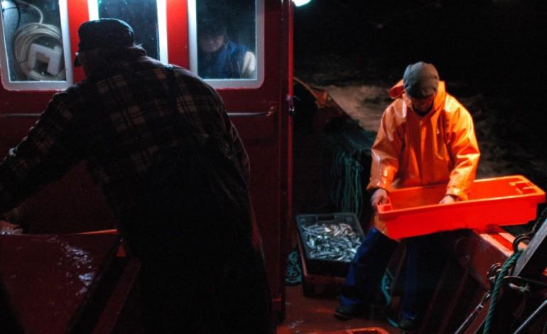 termina-hoje-proibicao-de-pesca-da-sardinha-8596