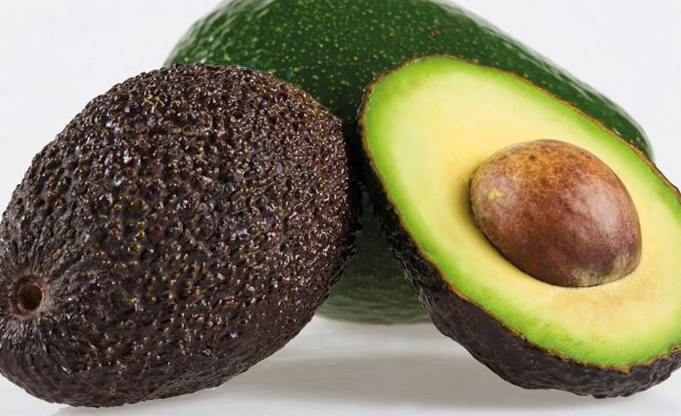 investimento-de-dez-milhoes-para-produzir-abacate-no-alentejo