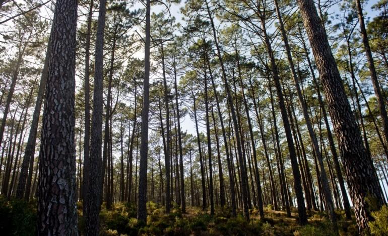 municipio-de-pombal-lanca-opa-florestal-4920
