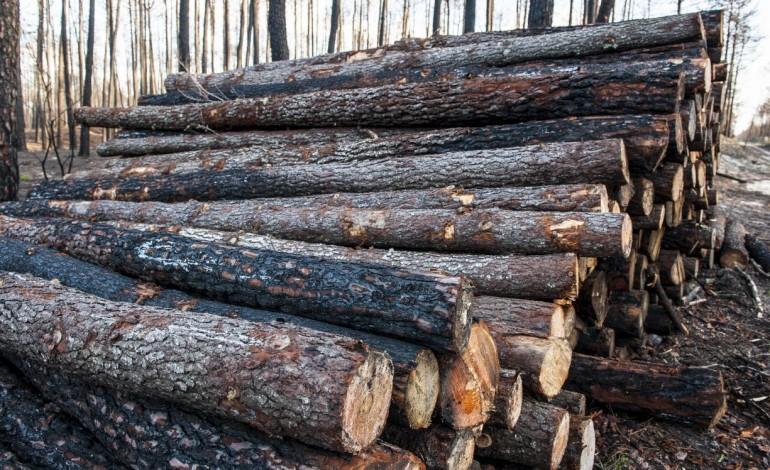 distrito-de-leiria-recebe-tres-novos-parques-para-madeira-queimada-8369