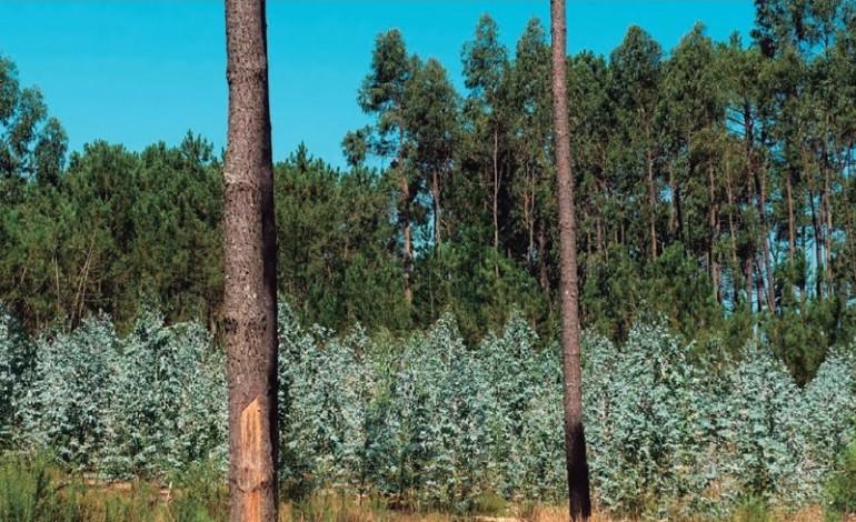 camara-de-pombal-disponivel-para-comprar-terrenos-florestais-4957