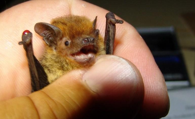va-a-pombal-conhecer-o-mundo-dos-pequenos-e-delicados-morcegos-7044