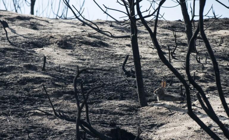 estado-de-alerta-vermelho-para-leiria-devido-ao-calor-e-risco-de-incendio-10646