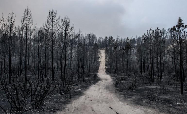 nao-ha-incendios-activos-desde-as-5-horas-da-manha-7356