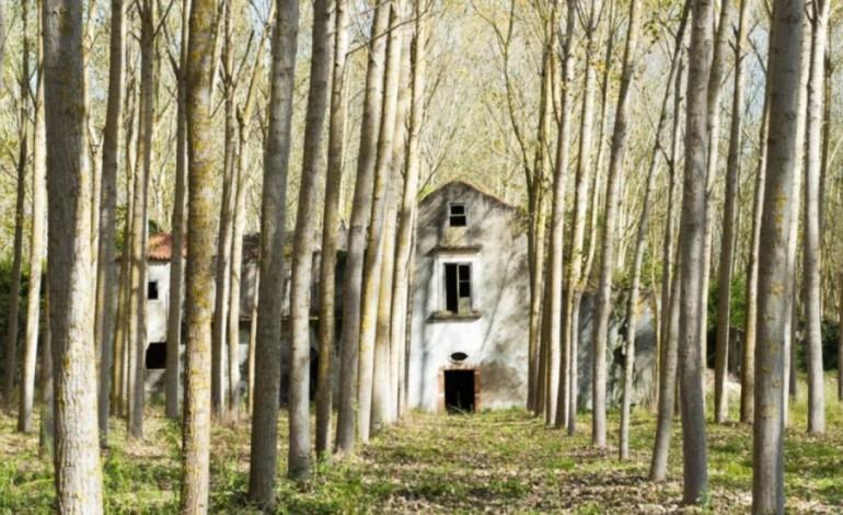 seminario-da-diocese-de-leiria-abateu-as-faias-e-plantou-eucaliptos-na-quinta-de-mouzinho-de-albuquerque-6997