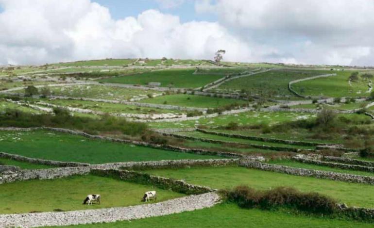 muros-de-pedra-seca-de-porto-de-mos-concorrem-a-final-das-7-maravilhas-da-cultura-popular