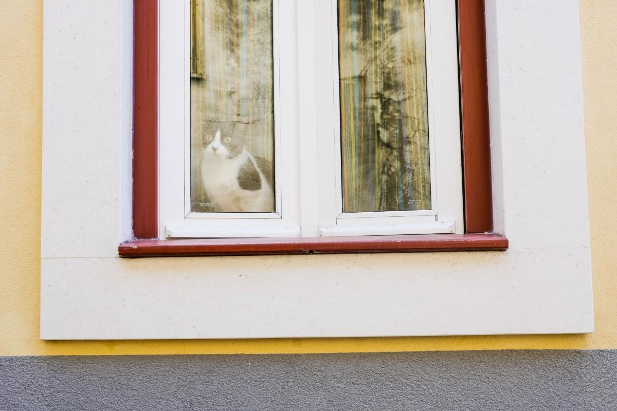 um-gato-no-centro-historico-leiria-2021