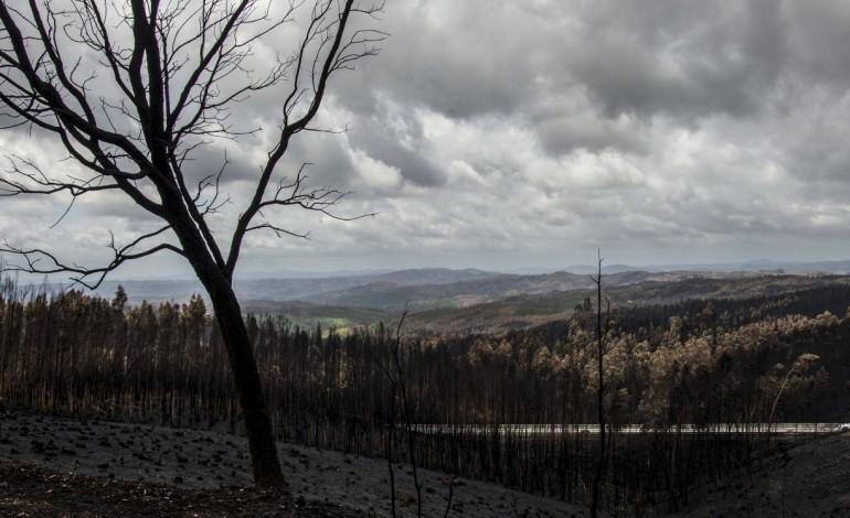 reforma-das-florestas-adiada-para-as-15-horas-6843
