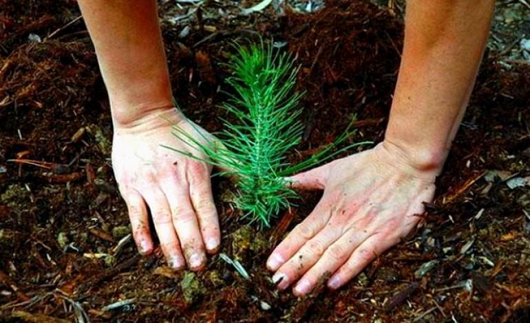 assimagra-planta-pinheiros-para-assinalar-fim-de-reconversao-ambiental-de-aterro-no-juncal