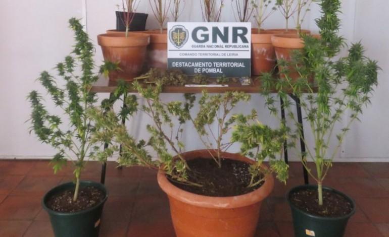 gnr-detem-suspeito-de-trafico-e-cultivo-de-droga-10713