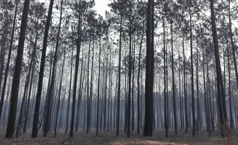 dos-31-mortos-confirmados-ate-agora-nos-incendios-de-ontem-e-hoje-nenhum-se-verificou-na-regiao-de-leiria-7351