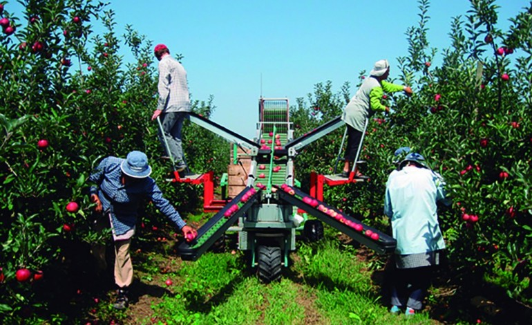 frutas-e-legumes-valem-10-da-economia-das-caldas-4846