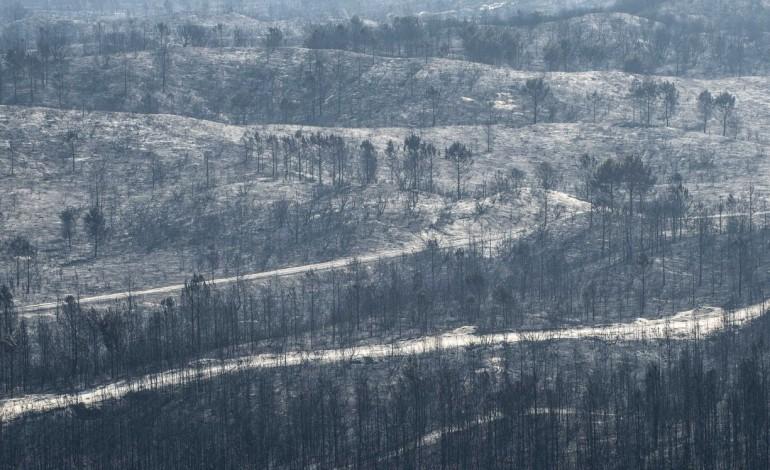 permanencia-de-pe-de-floresta-ardida-no-pinhal-de-leiria-desvaloriza-madeira-10428