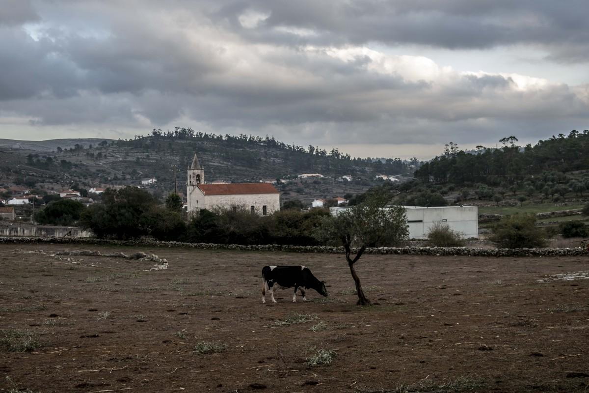 As vacas da dona Dionisia, também elas a secar ao ar livre