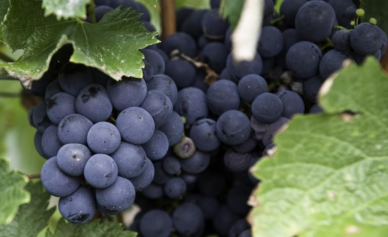 governo-aumenta-apoios-ao-sector-dos-vinhos-para-18-milhoes-de-euro