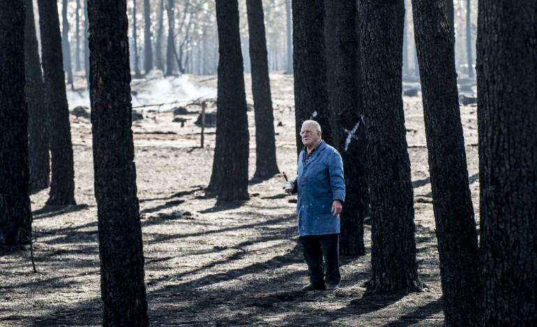 depois-do-fogo-trabalhos-para-proteccao-da-agua-avancam-no-pinhal-de-leiria-dentro-de-duas-semanas-7592